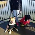Shannon,Maddix and Diesel